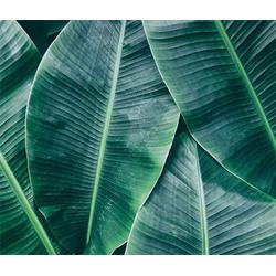 Designwalls-Fototapete »Banana Leaves«