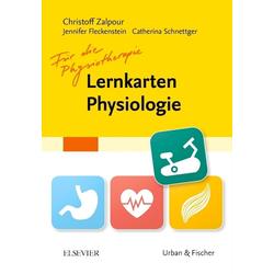 Lernkarten Physiologie für die Physiotherapie