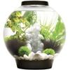 OASE Oase 72005 Aquarium 30l mit LED-Beleuchtung