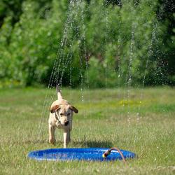 Hunde Wasserspielzeug Splash Pool Water Sprinkler blau, Höhe: ca. 10 cm, Durchmesser:  ca. 100 cm - ca. 100 cm