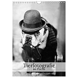 Tierfotografie im Focus (Wandkalender 2021 DIN A4 hoch)