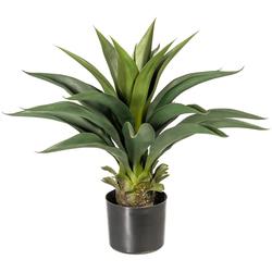 Künstliche Zimmerpflanze Svala Agave, andas, Höhe 56 cm