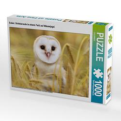 Eulen: Schleiereule in einem Feld auf Mäusejagd. Lege-Größe 64 x 48 cm Foto-Puzzle Puzzle