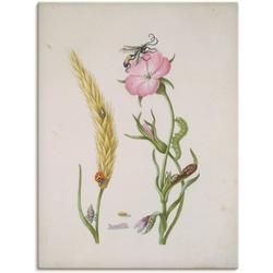 Artland Wandbild Marienkäfer Kornrade Larven und Puppen., Pflanzen (1 Stück) 30 cm x 40 cm