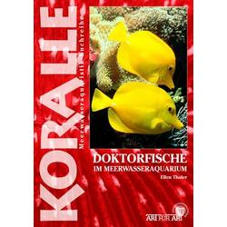 Doktorfische im Meerwasseraquarium als Buch von Ellen Thaler
