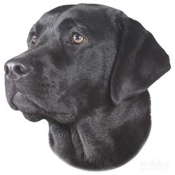 Nobby Aufkleber Labrador schwarz
