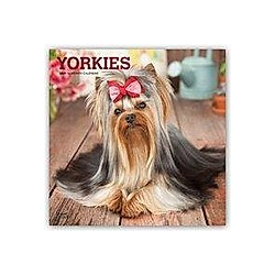 Yorkshire Terriers - Yorkshire Terrier 2021 - 16-Monatskalender mit freier DogDays-App