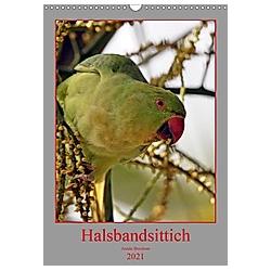 Halsbandsittich (Wandkalender 2021 DIN A3 hoch) - Kalender