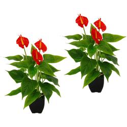 Kunstpflanze Anthurienpflanze Anthurie, I.GE.A., Höhe 40 cm