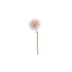 Asa Selection Pompon groß rose