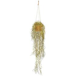 Kunstranke Tillandsien-Hänger, Creativ green, Höhe 70 cm, im Hängekorb