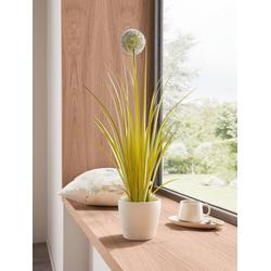 Kunstpflanze Zierlauch, HomeLiving