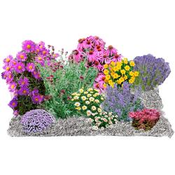 BCM Beetpflanze Splittbeet Set, 10 Pflanzen