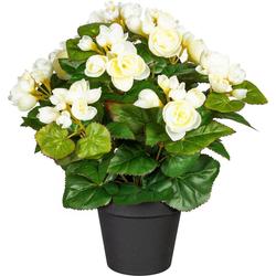 Künstliche Zimmerpflanze Eleonore Begonien, DELAVITA, Höhe 35 cm weiß