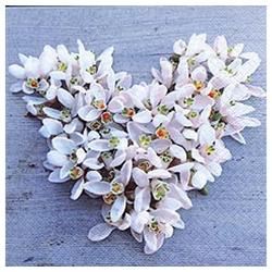 Linoows Papierserviette 20 Servietten, Frühling, Süßes Schneeglöckchen, Motiv Frühling, Süßes Schneeglöckchen Herz