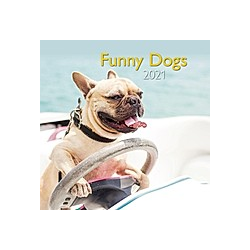 Funny Dogs 2021