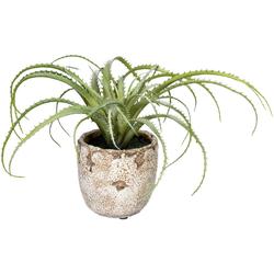 Künstliche Zimmerpflanze Aloe arborescens Aloe arborescens, Creativ green, Höhe 18 cm, im Zementtopf