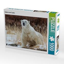 Eisbär in der Tundra Lege-Größe 64 x 48 cm Foto-Puzzle Bild von Michele Junio Puzzle