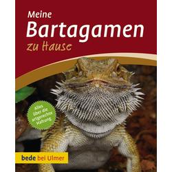 Bartagamen zu Hause: Buch von Werner Preißer