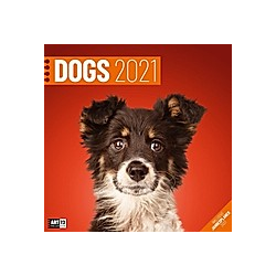 Dogs 2021