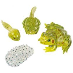 Lebenszyklus-Figuren: Frosch
