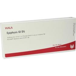 EPIPHYSIS GL D 5