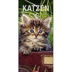 Katzen XL 2021