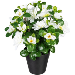 Künstliche Zimmerpflanze Annelie Azalee, my home, Höhe 26 cm weiß
