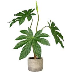 Künstliche Zimmerpflanze Aralie Aralie, Creativ green, Höhe 60 cm, im Zementtopf