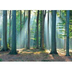 Deco-Panel Wald im Sonnenlicht, 140/100 cm