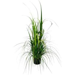 Kunstpflanze Gras im Topf Gras, I.GE.A., Höhe 120 cm