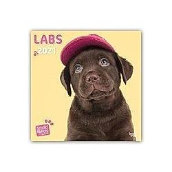 Labradors - Labrador Retriever 2021