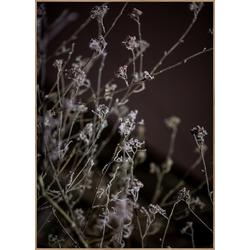 Poster MELLOW GRASSES 6 (BH 70x100 cm)