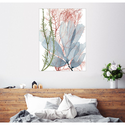Posterlounge Wandbild, Seepflanzen I 100 cm x 130 cm