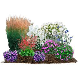 BCM Beetpflanze Blütenzauber Set, 9 Pflanzen