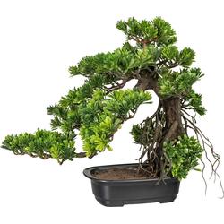 Kunstbonsai Bonsai Podocarpus Bonsai, Creativ green, Höhe 40 cm