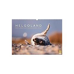 Helgoland - Das Leben auf der Düne Helgolands (Wandkalender 2021 DIN A3 quer)