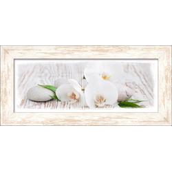 White Spring Pro-Art