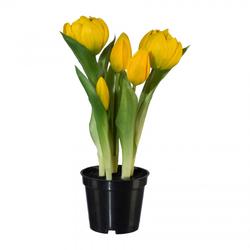 Tulpen im Topf gelb(H 25 cm)