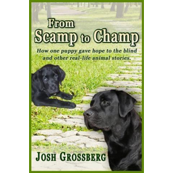 From Scamp to Champ