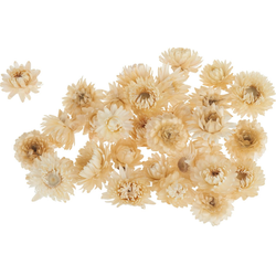 Kunstpflanze Strohblumenköpfe in Box, VBS, 20 - 30 g braun