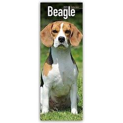 Beagle 2021