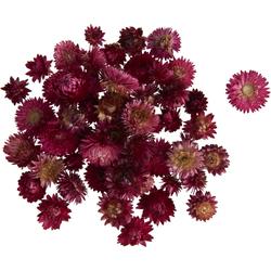 Kunstpflanze Strohblumenköpfe in Box, VBS, 20 - 30 g rosa
