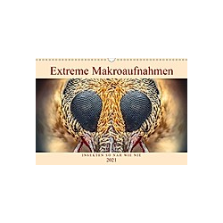 Extreme Makroaufnahmen - Insekten so nah wie nie (Wandkalender 2021 DIN A3 quer)