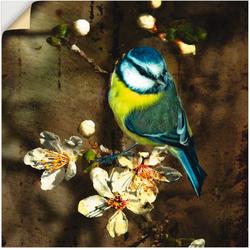 Artland Wandbild Blaumeise auf Kirschzweig, Vögel (1 Stück) 30 cm x 30 cm