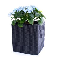 Pflanzkübel Polyrattan quadratisch 50x50x50cm schwarz.