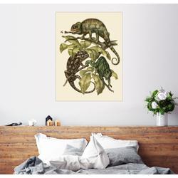 Posterlounge Wandbild, Chamaeleonidae (Chamäleons) 70 cm x 90 cm