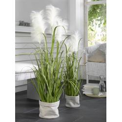 Kunstpflanze Zwiebelgras (H 124 cm) Casa Nova