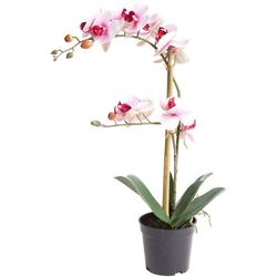 Kunstorchidee Orchidee Bora Orchidee, Botanic-Haus, Höhe 50 cm