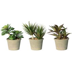 Künstliche Zimmerpflanze Romina Sukkulente, my home, Höhe 18 cm, 3er Set